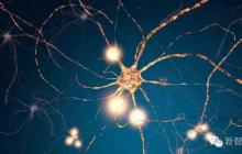 Science:研究发现人脑新记忆形式,有助于解释学习机制与大脑原理