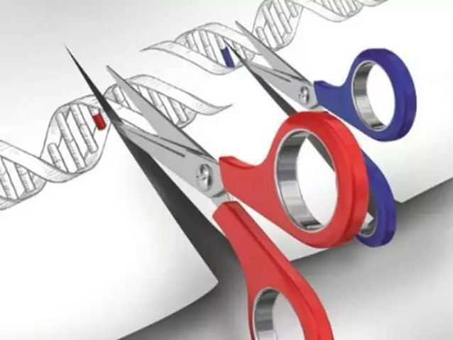 定制婴儿将就此诞生?美国国家科学院允许基因编辑