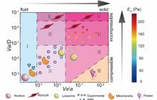 用流体机械分析法为细胞器运动建模,一张图即可呈现复杂生命活动