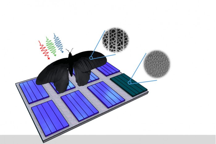 科学家模仿蝴蝶翅膀研发太阳能面板,收光能力翻了两番