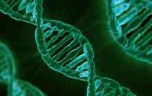 从有强迫行为的狗出发,研究人员找到8000万强迫症患者的突变基因