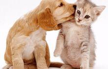 研究表明:狗的神经元数是猫的两倍,狗或比猫聪明