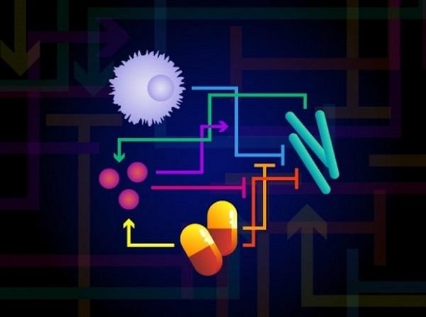哈佛联合MIT研究证明:抗生素会直接削弱人体的免疫系统