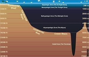 """我国研发的""""水下机器人"""",可以利用海水温度差自行供电"""