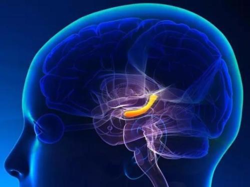 MIT神经科学家推翻15年前相关成果,找出人类对于环境的全新记忆机制