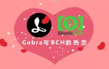 Cobra与BCH的热恋
