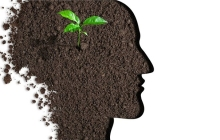 吴恩达都在做的AI农业到底有什么魔力?