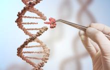 教育部发文要求各高校自查基因编辑相关研究项目,新年之前必须完成