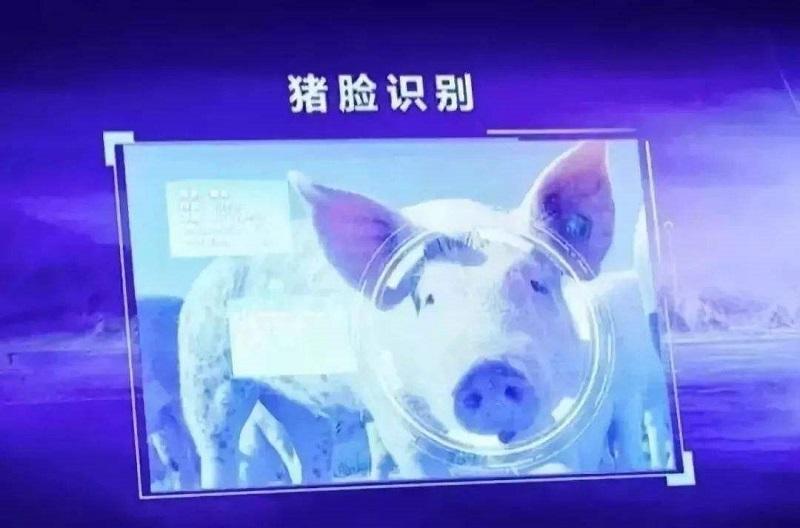 """""""猪""""门酒肉香"""