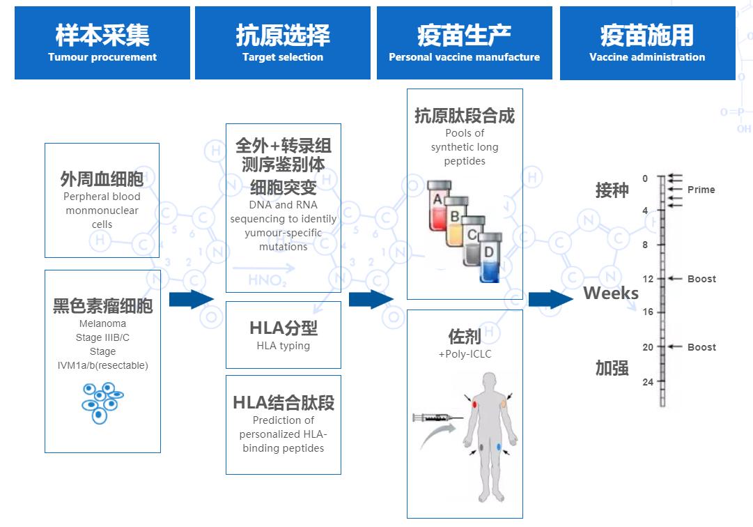 格源致善苏小平:AI助力新抗原预测,解决个性化肿瘤疫苗难题