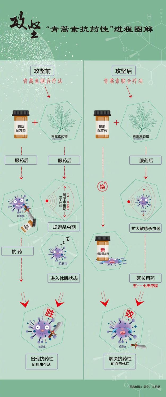 """屠呦呦团队带来新突破,解决""""青蒿素抗药性""""难题"""